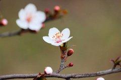 春分|陌上花开 不负韶华