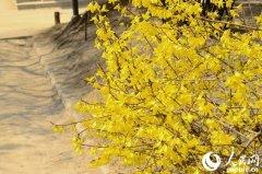 当花遇上诗词:每一朵花开,都是春天